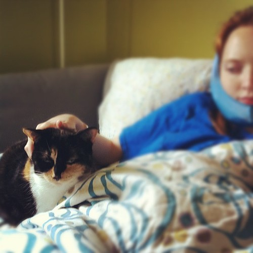 it's Ginger's turn to check-in with the patient #wisdomteeth #cats