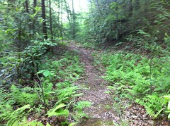 Jacks River Trail