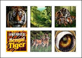 free Untamed Bengal Tiger slot game symbols