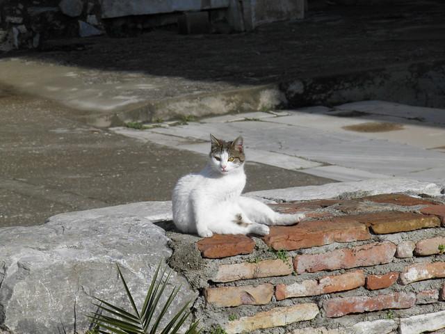 Cat among the ruins, Ephesus, Turkey