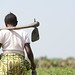 Mitigating the rising prices of food - DR Congo