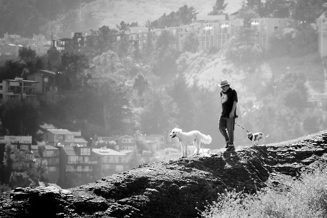 Man, Dogs, Bernal