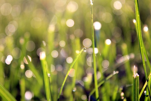 [フリー画像素材] 花・植物, 草原, 雫・水滴 ID:201205310600