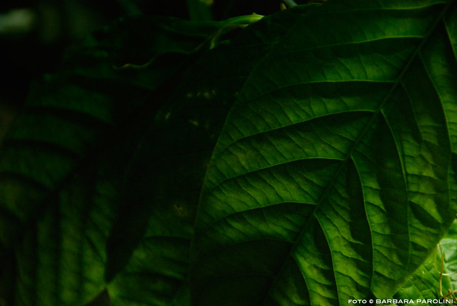 dark green leaves | Flickr - Photo Sharing!