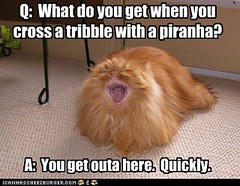 funny-pictures-lolcats-q-what-do-you-get-when-you-cross-a-tribble-with-a-piranha1