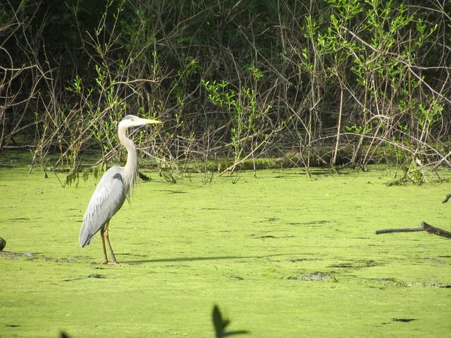 Crane in Wisconsin