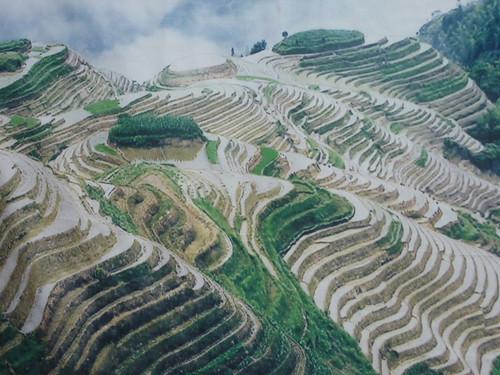 C-Guangxi-Pingan-Terrasse des 7 etoiles (9)