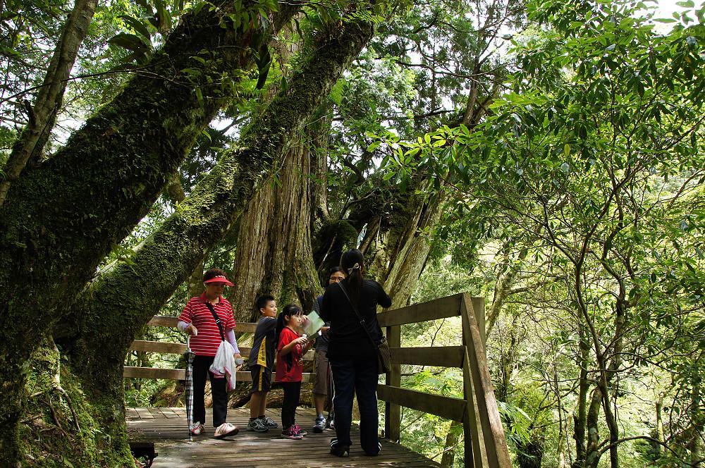 巨木群,與往拉拉山的路上-045