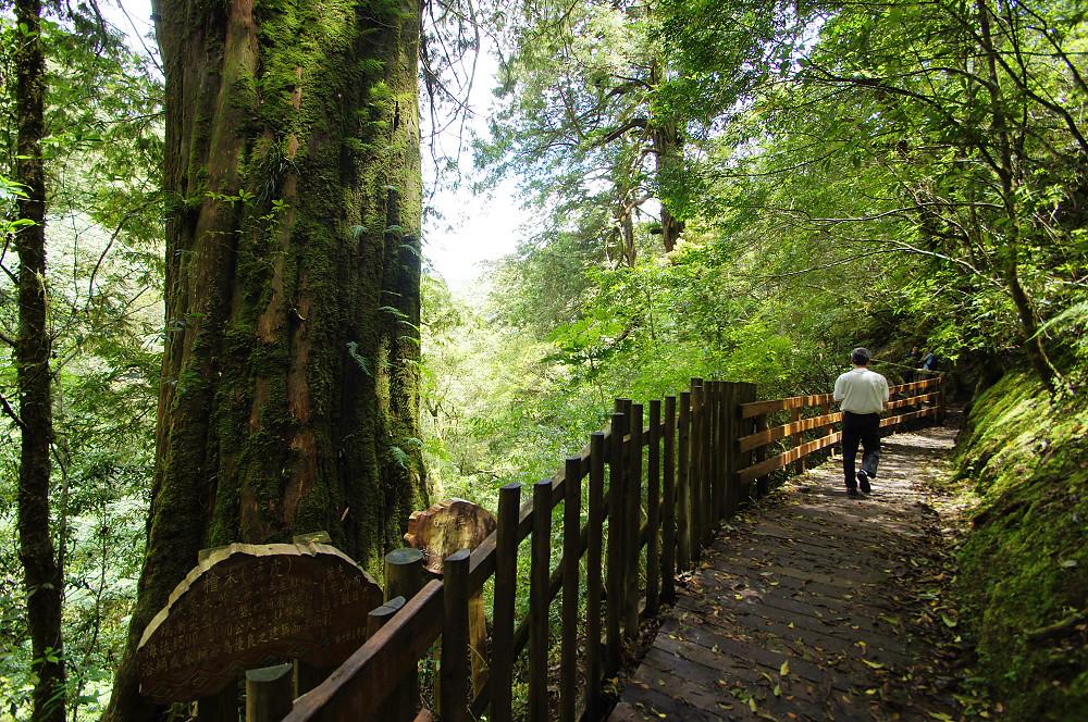 巨木群,與往拉拉山的路上-036