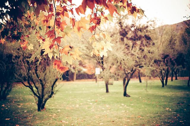 Vintage Autumn   Flickr - Photo Sharing!