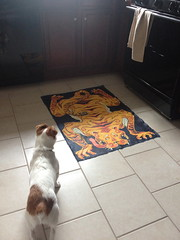 I cam upon a tiger in the kitchen