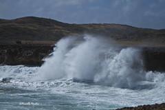 wave IMG_2786