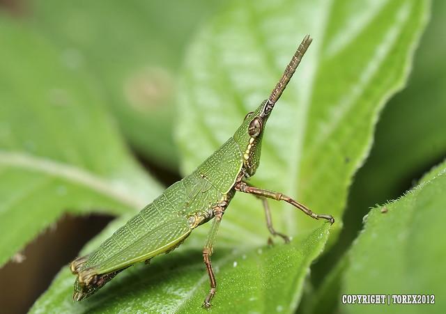 Mr Green..