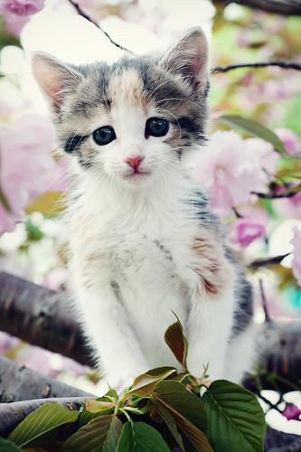 Kittens Grow In Trees
