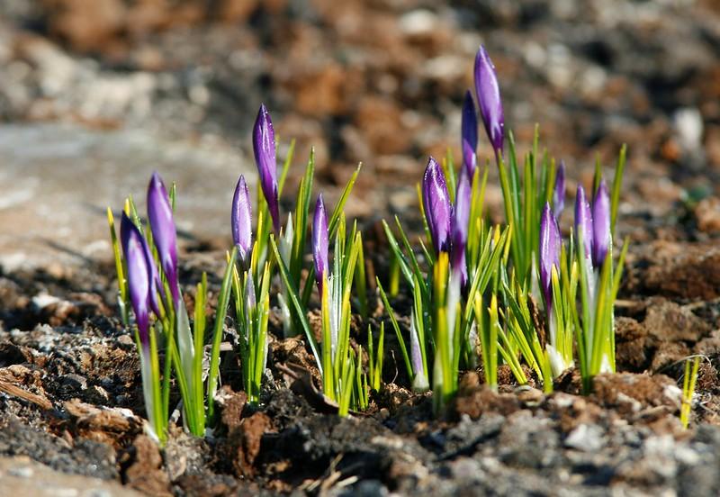 spring 028