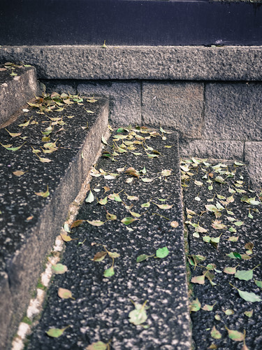 Leaves on stone steps by hyossie