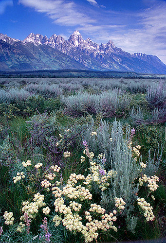 Wild Flowers and wild Mountains  R337N15