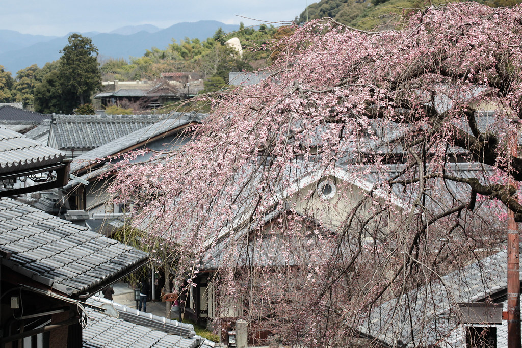 Kyoto-shi, Kyoto Prefecture, Japan