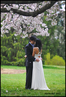 Holding My Love In The Rain of Blossoms - Cherry Queen Elizabeth Park N8843e