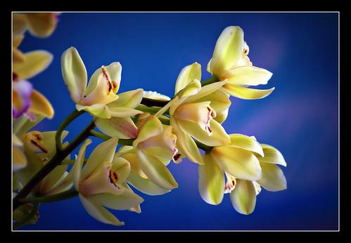 Orquideas by gilxxl