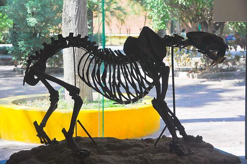 Museo de Paleontología (01)