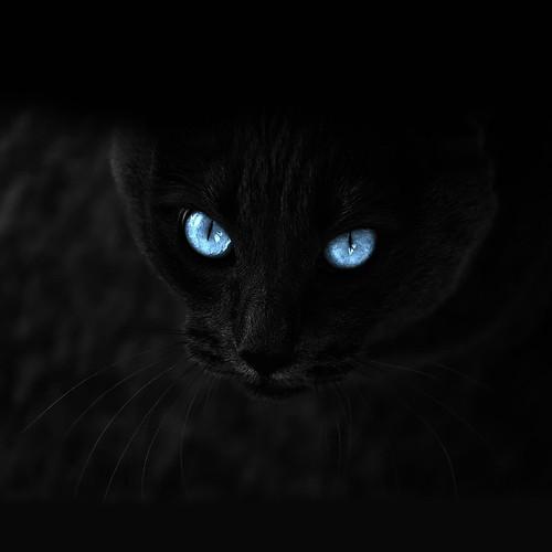 [フリー画像素材] 動物 1, 猫・ネコ ID:201203311000