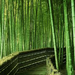 [フリー画像素材] 自然風景, 森林, 竹・竹林, 緑色・グリーン ID:201204132000