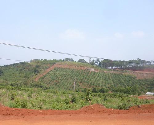 V-Route HCM-Buon Ma Thuot (150)