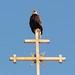 birdofpray by GeorgeB-Sitka