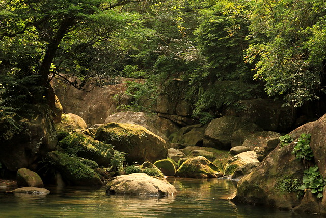 Secret  Pool at Iriomote jungle 西表島ジャングル