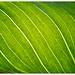 (176/366) Greening