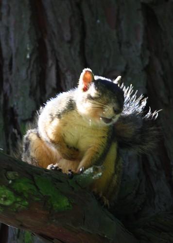 Laughing Squirrel