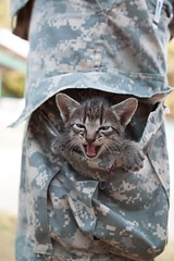 [フリー画像素材] 動物 1, 猫・ネコ, 子猫・小猫 ID:201207011000