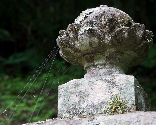 Myonhonji - lichen etc