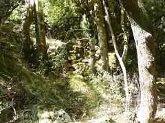 Le vieux sentier en RD en amont de la brèche du Carciara : retour des murets avant la vasque