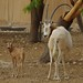 Small photo of Al Ain zoo, UAE