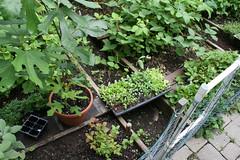 fall seedlings 005