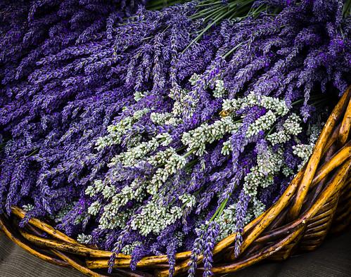 brown green field yellow oregon basket purple unitedstates lavender bee pollenation columbiarivergorge corbett historiccolumbiariverhighway fav10 wickerbasket