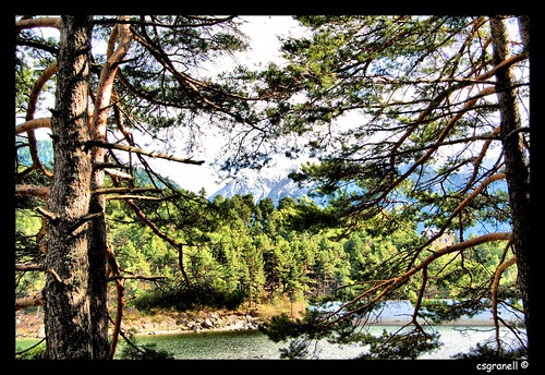 paisajes naturaleza arboles natura arbres andorra paisatges 2011 principatd´andorra llacd´engolasters csgranell