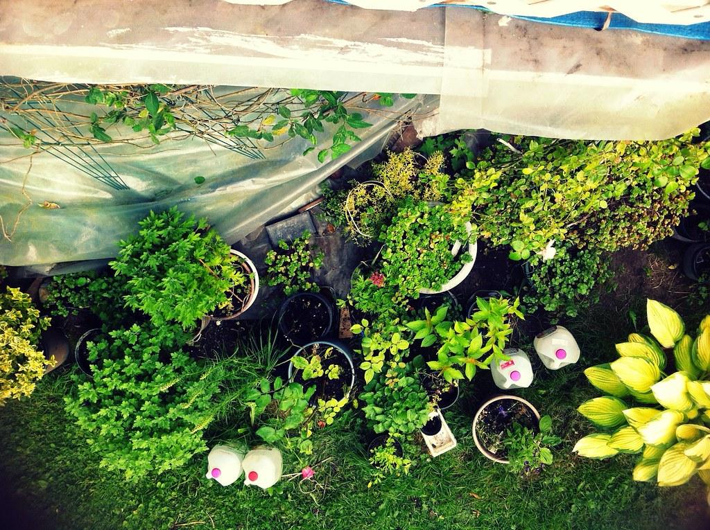 the little gardener*