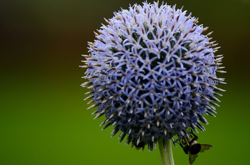 flower nikon novascotia bees halifax d7000 tamron70300356g