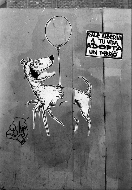 """Fotografía convencional, Lima en rollo: """"Adopta un perro"""""""