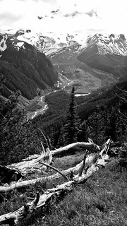 Glacial Valley Vista with Wood (B&W)
