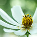 Samsung NX20 imageloger -  Photo wallpaper-2 by Samsung SMART CAMERA