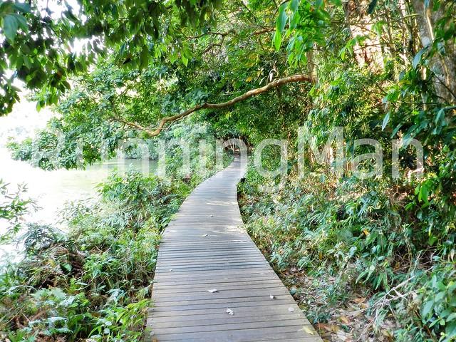 MacRitchie Reservoir Park & HSBC TreeTop Walk 01