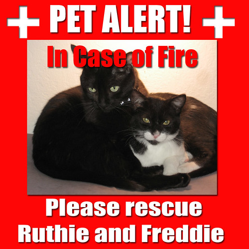 Pet Alert Please Rescue Ruthie and Freddie copy