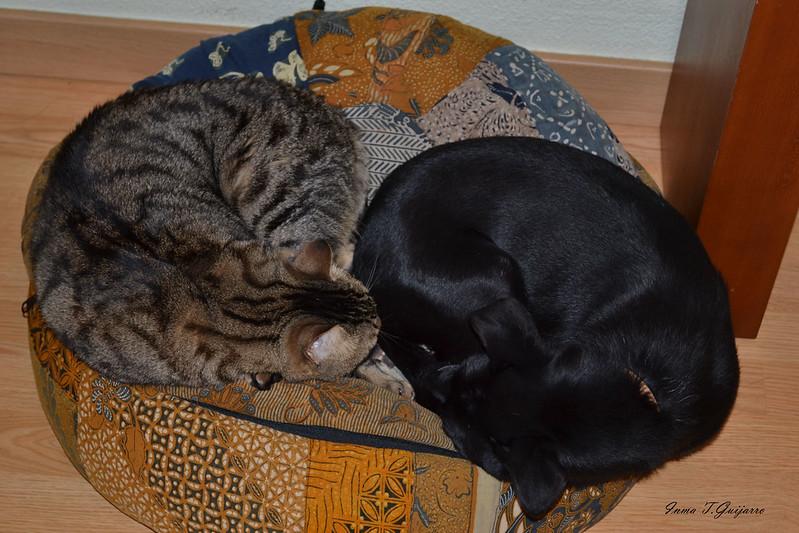 Odín y Tiger