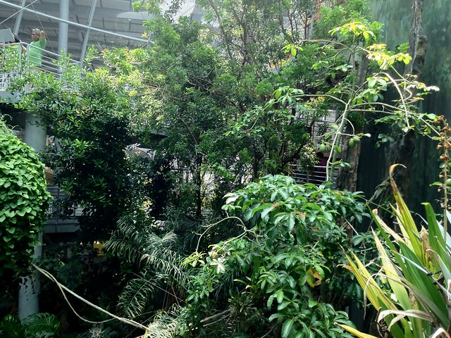 The biodome at CAS