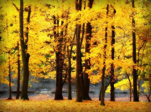 autumn ohio fall yellow orton ashtabulacounty ashtabularivergulf picmonkey