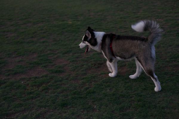 jaxharmon_dogpark_13
